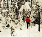 Snowshoeing 2014 - The Reeds