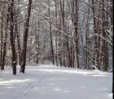 The woods behind Brenda's house in beautiful East TN