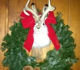 Jackalope in the Christmas spirit  - Carla A